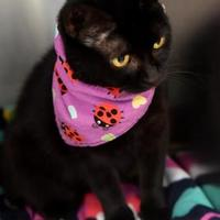 Adopt A Pet :: Starling - Corvallis, OR