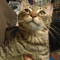 Adopt A Pet :: Little Friend - Brookhaven, PA