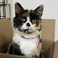 Adopt A Pet :: Diana - Sheridan, WY