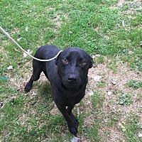 Adopt A Pet :: Belle - Summer Shade, KY