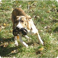 Adopt A Pet :: Harley AWESOME DOG! - Antioch, IL