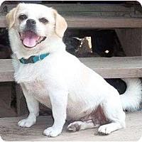 Adopt A Pet :: Relayna - Allentown, PA