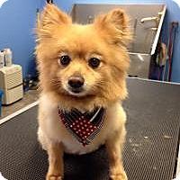 Adopt A Pet :: Porter - Mt Gretna, PA