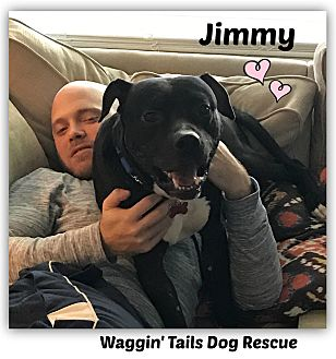 Terrier (Unknown Type, Medium) Mix Dog for adoption in Northville, Michigan - Jimmy