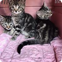 Adopt A Pet :: Curly - Warren, OH
