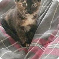 Adopt A Pet :: Kiley - Parkton, NC