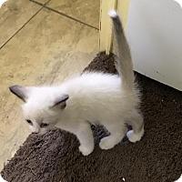 Adopt A Pet :: Luke - Melbourne, FL