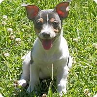 Adopt A Pet :: Dozer - Clarksville, TN