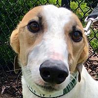 Adopt A Pet :: Ann - Longwood, FL