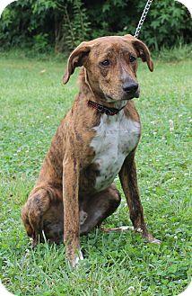 Hound (Unknown Type) Mix Dog for adoption in Waldorf, Maryland - Duke