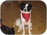 Border Terrier Mix Dog for adoption in London, Ontario - Knielia