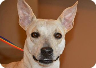 Terrier (Unknown Type, Medium) Mix Dog for adoption in Ft. Lauderdale, Florida - Lilly