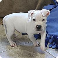 Adopt A Pet :: Heath - Loxahatchee, FL