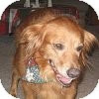 Adopt A Pet :: Sarah - Yorktown, VA