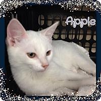 Adopt A Pet :: Apple - Bradenton, FL