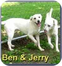 Labrador Retriever Mix Dog for adoption in Aldie, Virginia - Ben & Jerry