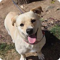 Adopt A Pet :: Juni - Meridian, ID
