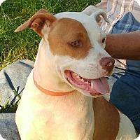 Adopt A Pet :: Pinky - Emmett, MI