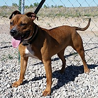 Adopt A Pet :: Hazel - Sterling, CO