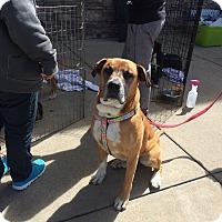 Adopt A Pet :: Buster - Hohenwald, TN