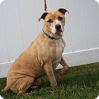 Adopt A Pet :: Prince - Shelby, MI