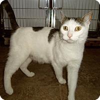 Adopt A Pet :: KEYLANI - Medford, WI