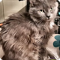 Adopt A Pet :: Lavender - brewerton, NY