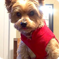 Adopt A Pet :: Teddy - Salem, OR