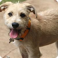 Adopt A Pet :: Merida - Woonsocket, RI