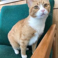 Adopt A Pet :: Gabby - Maryville, MO