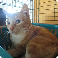 Adopt A Pet :: King Tut - Coos Bay, OR
