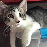 Adopt A Pet :: Strut - Topeka, KS