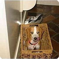 Adopt A Pet :: Lily - Kingwood, TX