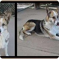 Adopt A Pet :: Gracie - San Diego, CA