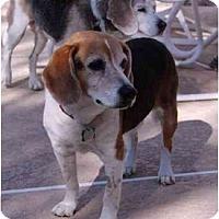 Adopt A Pet :: Rico - Phoenix, AZ