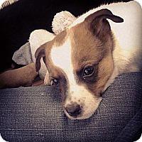 Adopt A Pet :: Toccoa - Marietta, GA