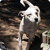 Adopt A Pet :: Spotty - Glenpool, OK