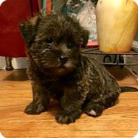 Adopt A Pet :: Maisy-Pending Adoption - Omaha, NE