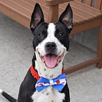 Adopt A Pet :: King - Manhattan, NY