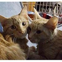 Adopt A Pet :: Paulina - New York, NY