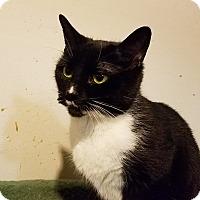 Adopt A Pet :: checkers - Trevose, PA