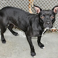 Adopt A Pet :: Trudy - Hilton Head, SC