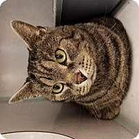 Adopt A Pet :: Sundance - Lakewood, CO