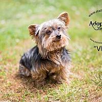 Adopt A Pet :: Vee - Mount Gretna, PA