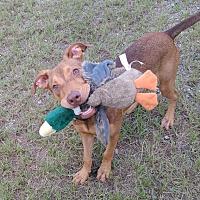 Adopt A Pet :: Frankie-URGENT/ADOPTED - Springfield, MA