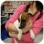 Photo 2 - Jack Russell Terrier Puppy for adoption in Lonedell, Missouri - Logan