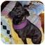 Photo 4 - Mountain Cur/Labrador Retriever Mix Dog for adoption in Williston, Vermont - Lizzie