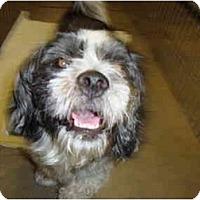 Adopt A Pet :: Shaggy - Winter Haven, FL