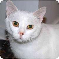 Adopt A Pet :: Quentin - Markham, ON