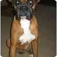 Adopt A Pet :: Dougan - Thomasville, GA
